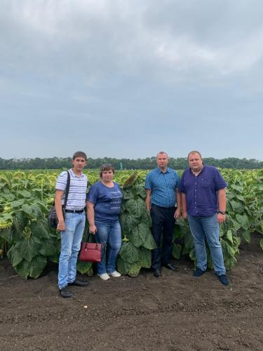 "Teachers and students of Stavropol State Agrarian University took part in the All-Russian festival ""Field Day VNIIMK 2019"""